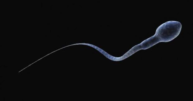 Χάνεται το ανδρικό σπέρμα - 60% μείωση τα τελευταία 40 χρόνια